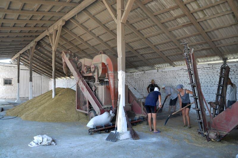 Hot Harvest time_9. Kolyndyany - Chortkiv - Ukraine - July 9, 2012. Weekdays hot harvest seasons in the private agricultural enterprise in the village Kolyndyany royalty free stock photo