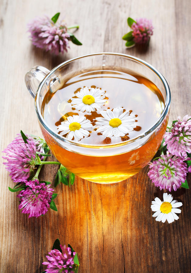 Hot herbal tea with clover stock images