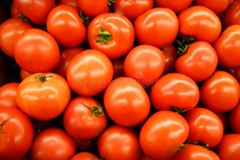 Hot House Tomatoes royalty free stock photo