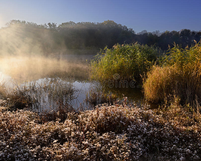 Hot morniing. Cold morning landscape with a river. Grass covered by hoarfrost stock photo