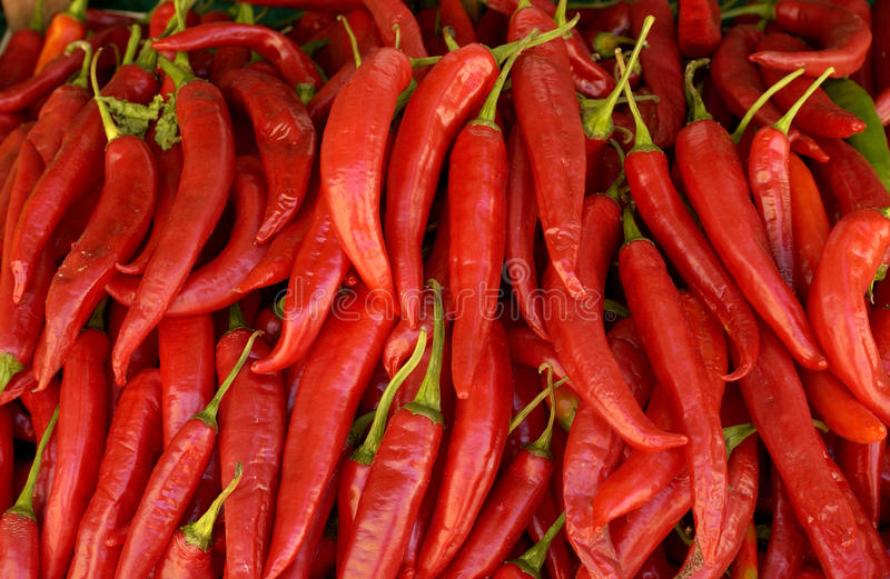 Hot peppers stock photography
