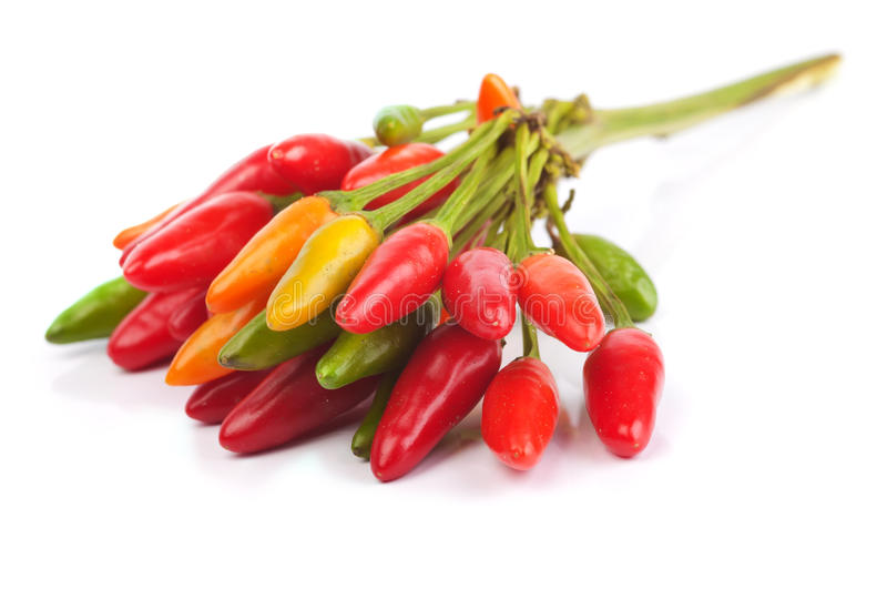 Hot Peppers. Isolated on a white background stock photos