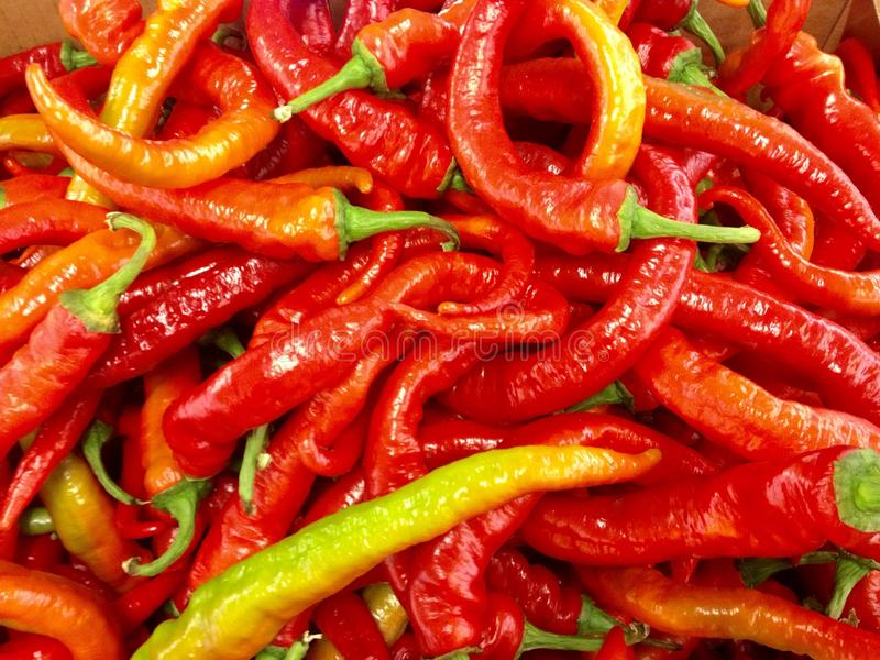 Hot Peppers. An image of hot peppers stock photography