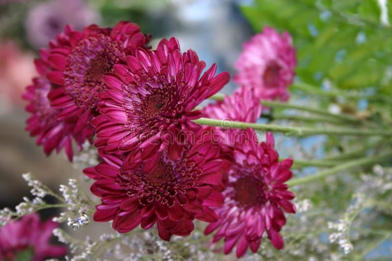 Hot Pink Petals stock image
