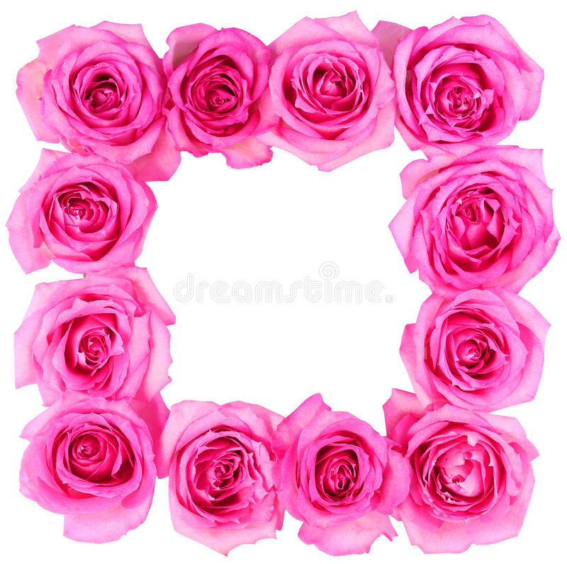 Hot Pink Roses Frame Isolated Stock Image - Image of love, bunch ...