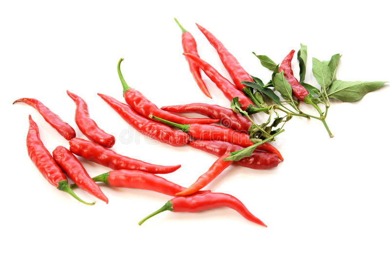 Hot red chili or chilli pepper isolated on white background. royalty free stock photos
