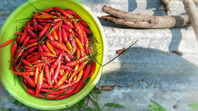 Hot Red Chilli royalty free stock photography