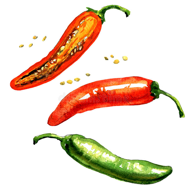 Hot red, green chili or chilli pepper isolated, watercolor illustration stock illustration