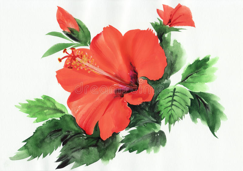 Hot red hibiscus stock illustration