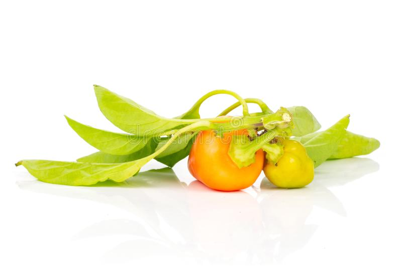 Hot red orange chili pepper isolated on white. Group of two whole hot red orange chili pepper with leaves isolated on white background stock photography