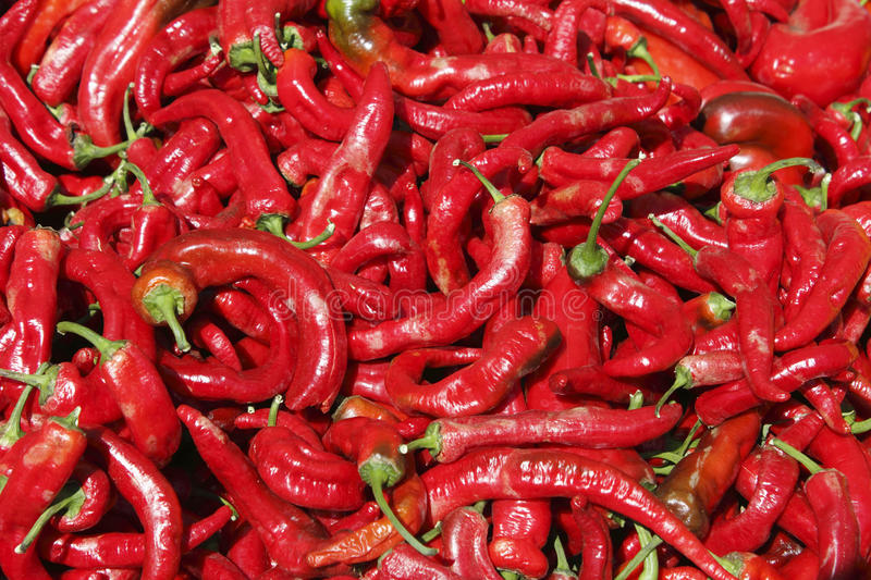 Hot red peppers in the summer sun. Background of long hot red peppers with green stems outside in the day light stock photos