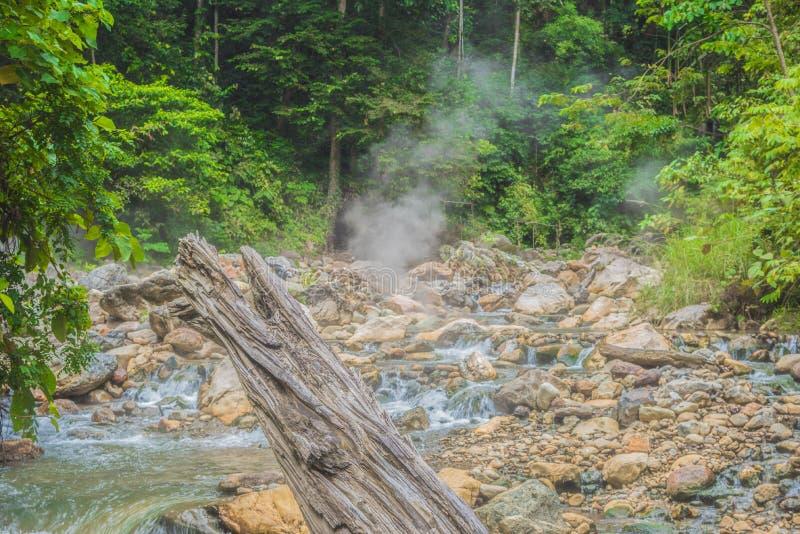 Hot Springs bonito na selva fotos de stock
