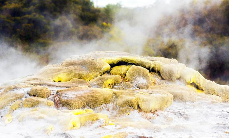 Hot Springs i Te Puia, Rotorua i Nya Zeeland på den norr ön arkivfoton
