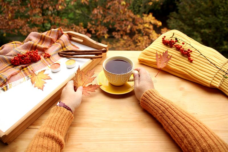 Hot tea, coffee in female hands with yellow and orange leaves, the concept of autumn mood, cozy knitwear, cinnamon sticks and. Candles on a tray, trees in the royalty free stock image