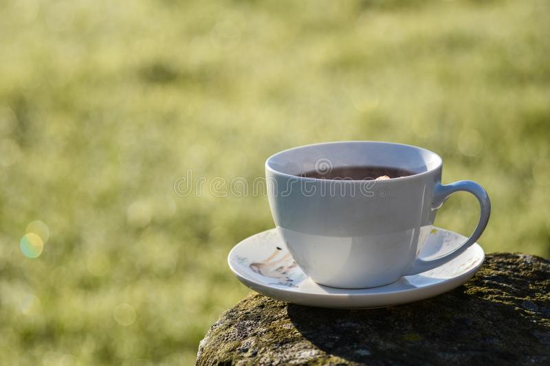 Cup of tea in morning stock photos