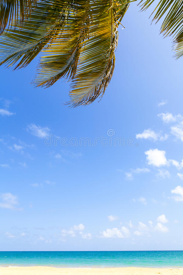 Download Hot Tropical Beach stock image. Image of island, puerto - 33630931