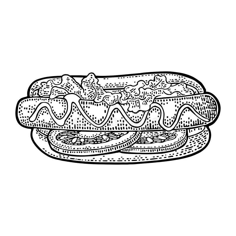 Hotdog z pomidorem, musztarda, urlop sałata Wektorowy czarny rytownictwo ilustracja wektor