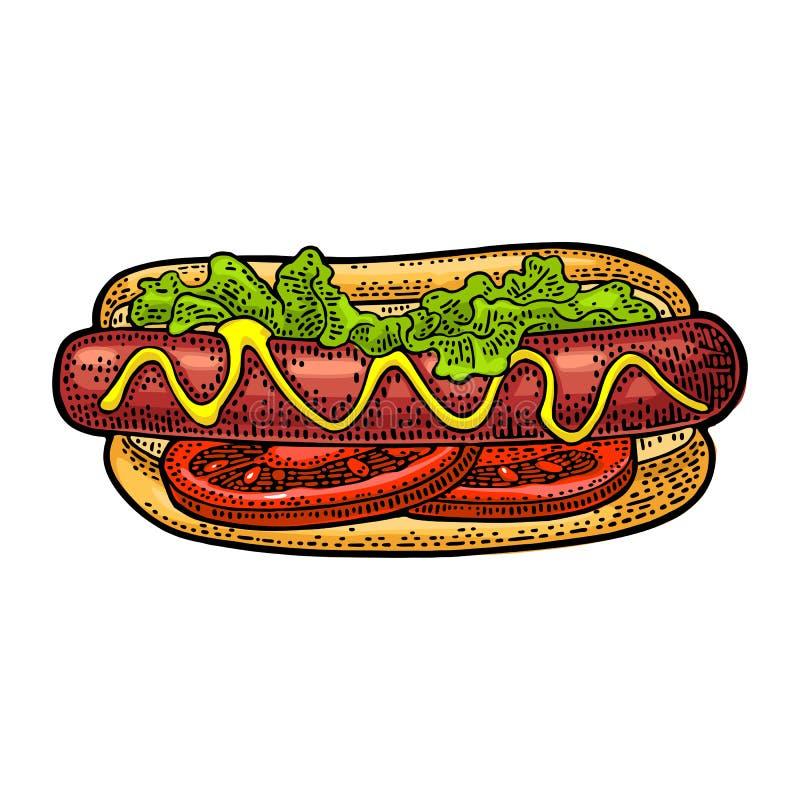 Hotdog z pomidorem, musztarda, urlop sałata Wektorowy koloru rytownictwo royalty ilustracja