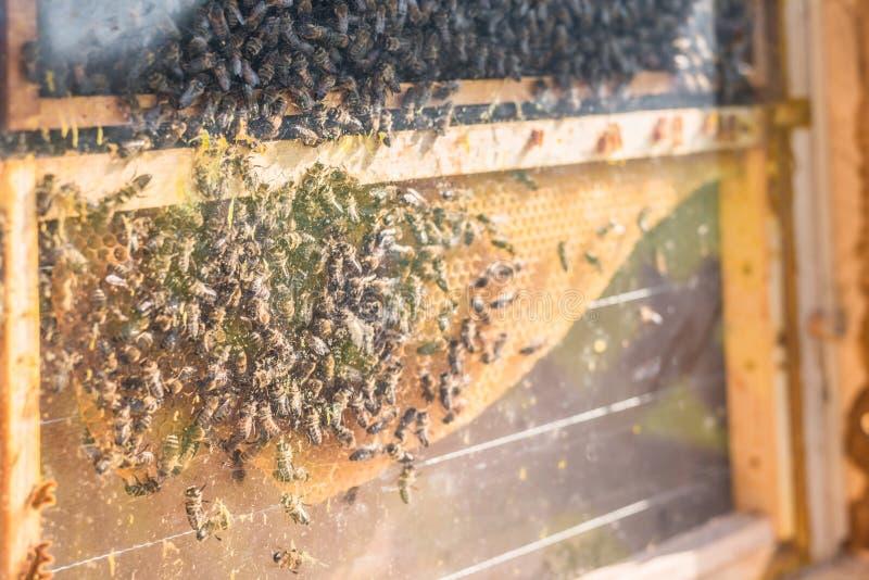 Hotel de Beehive e insectos en un prado de una granja, Alemania foto de archivo libre de regalías