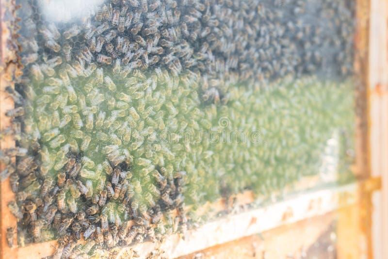 Hotel de Beehive e insectos en un prado de una granja, Alemania fotos de archivo libres de regalías