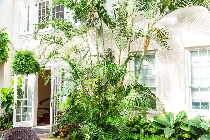 Hotel facade with palms and plants. Hotel facade with palms and green plants royalty free stock photo