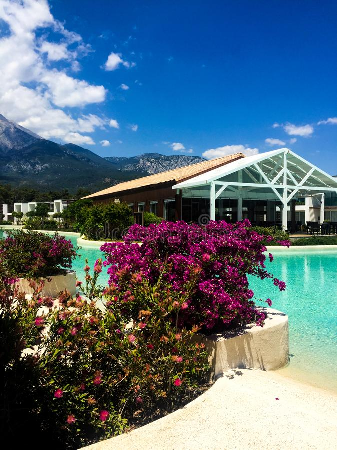 Hotel pool and flowers bush. Close up background royalty free stock image