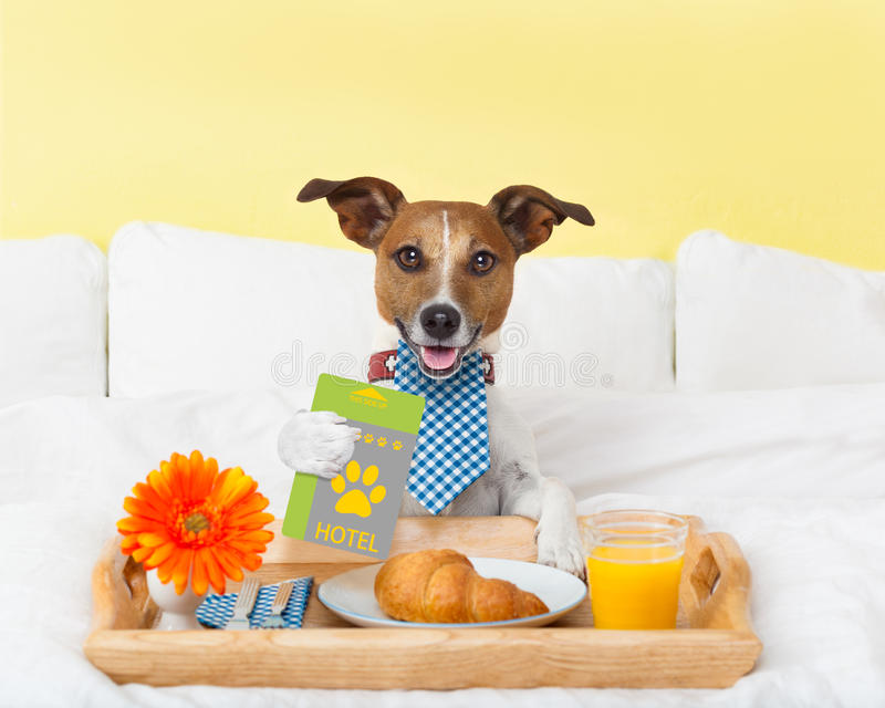 Hotel room service wtih dog royalty free stock images