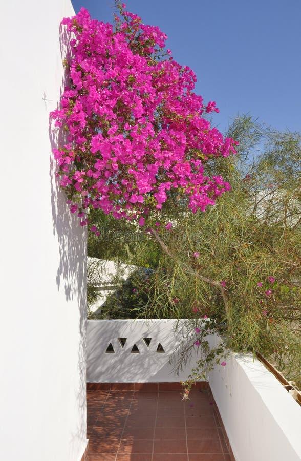 Download Hotel Sabena Marmara In Sharm-El-Sheikh Royalty Free Stock Photo - Image: 13010425