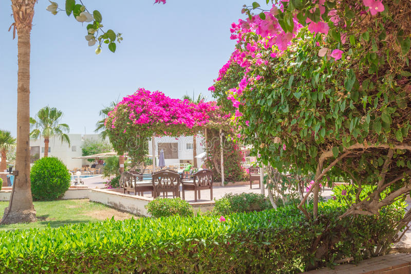 Hotel in Sharm El Sheikh. Landscape sketches on the hotel in Sharm el- Sheikh stock photo