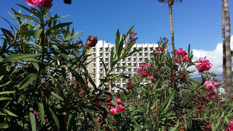 Hotel at Tenerife, Adeje. Spain. Hotel and Flowers at Tenerife holiday place, Adeje. Good place to relax stock photography