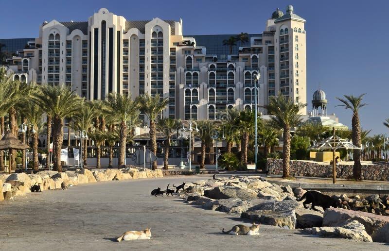 Hoteles de centro turístico en Eilat, Israel fotos de archivo libres de regalías