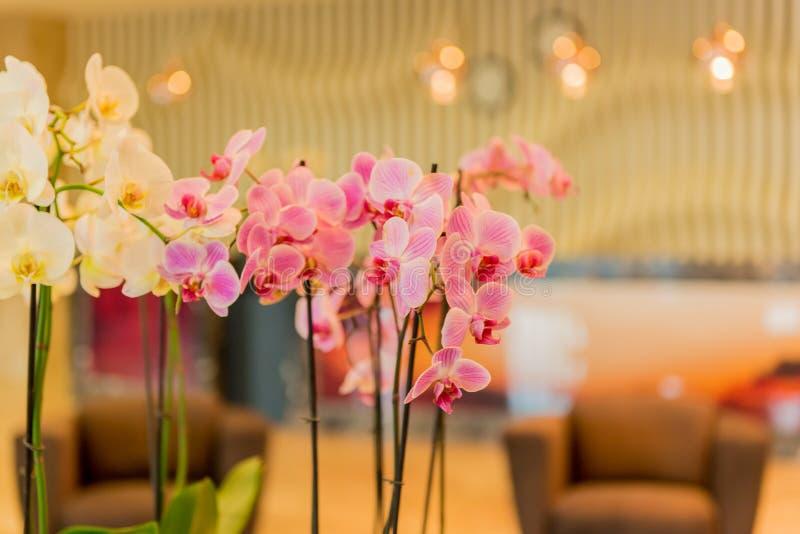 Hotelllobby med modern design arkivbild
