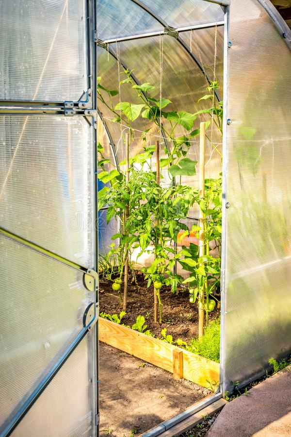 Hothouse in the garden with oped door stock images