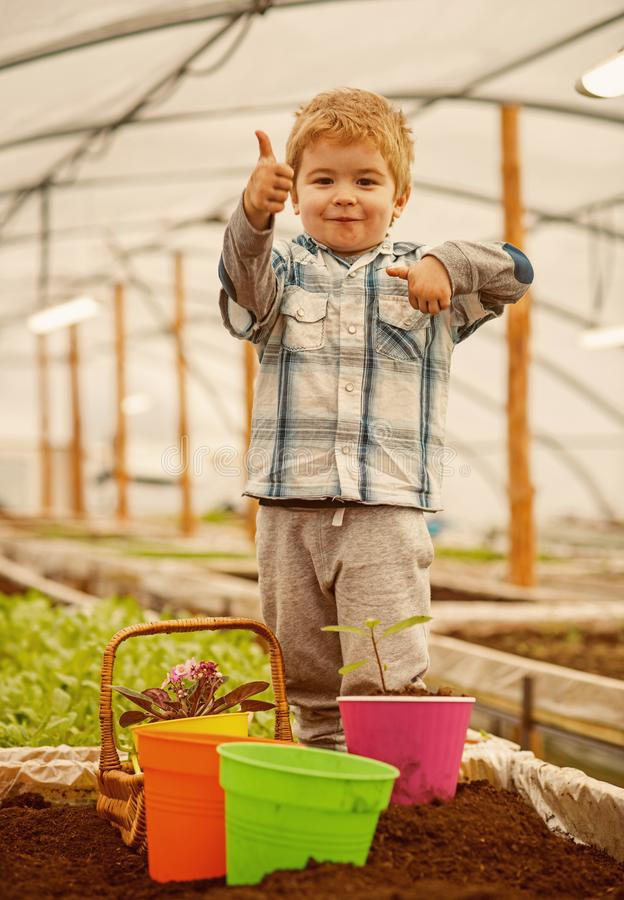 Hothouse industry. hothouse industry pdoruction. small child farmer work in hothouse industry. hothouse industry concept. Fun royalty free stock images