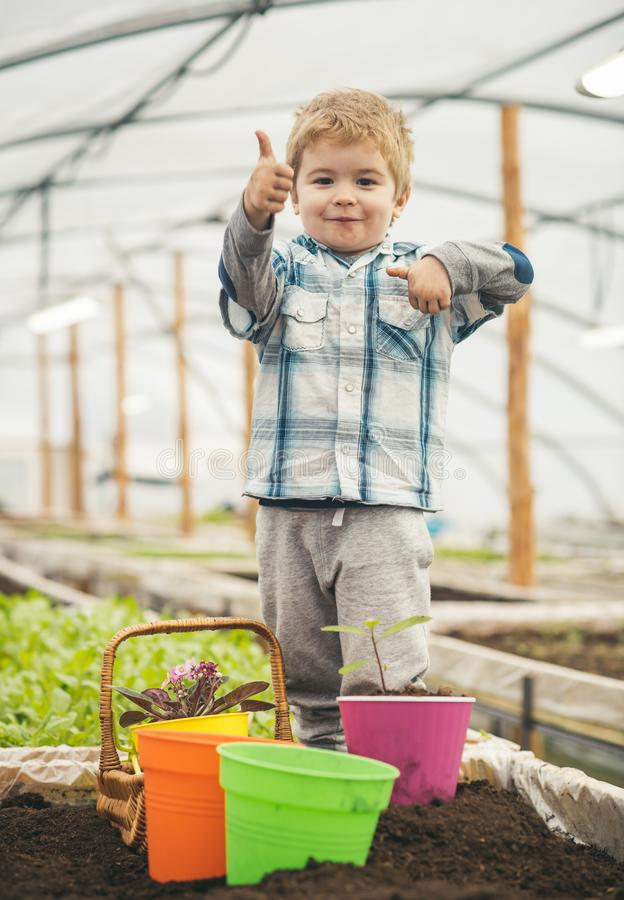 Hothouse industry. hothouse industry pdoruction. small child farmer work in hothouse industry. hothouse industry concept. Fun royalty free stock photo