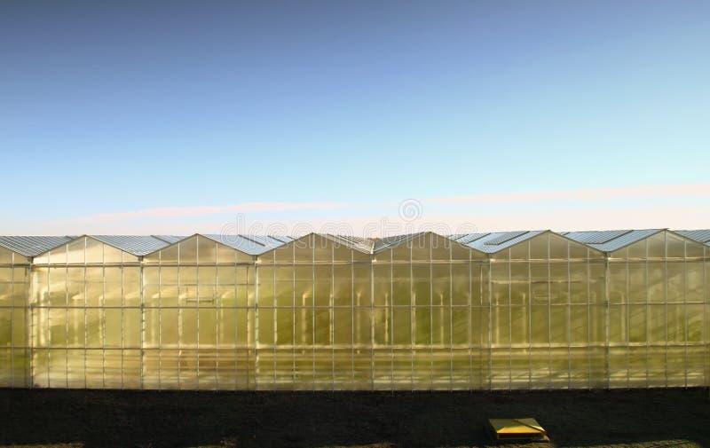 Download Hothouse outside stock image. Image of farm, botanical - 28535827