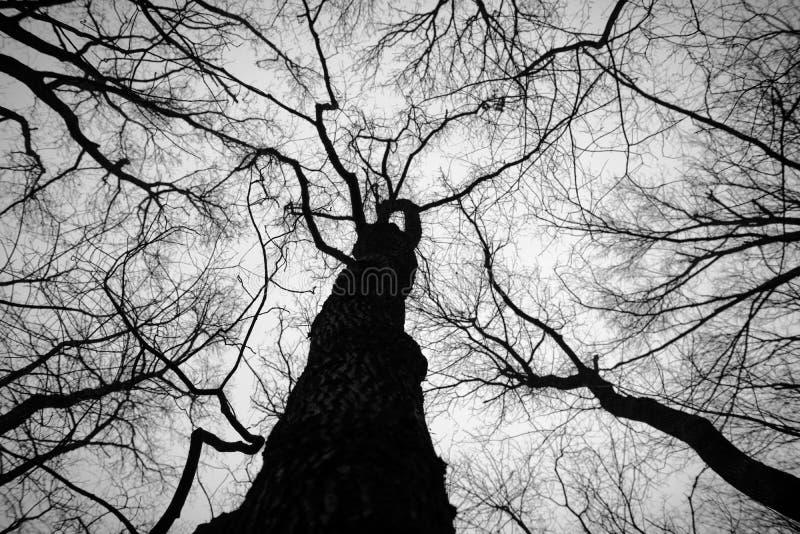 Hoto abstrato de alguns ramos do inverno fotos de stock royalty free