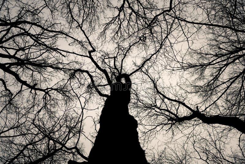 Hoto abstrato de alguns ramos do inverno imagem de stock