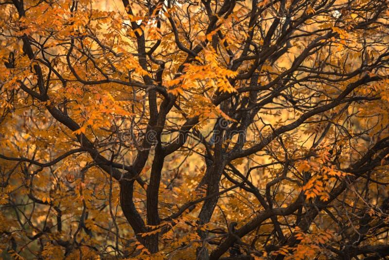 Hoto abstrato de alguns ramos do inverno fotografia de stock royalty free