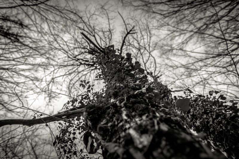 Hoto abstrato de alguns ramos do inverno foto de stock