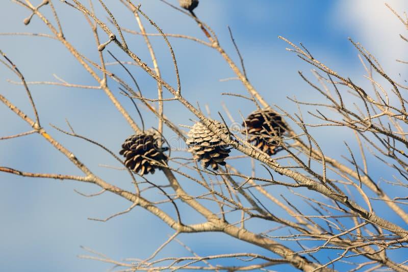 Hoto abstrato de alguns ramos do inverno imagem de stock royalty free