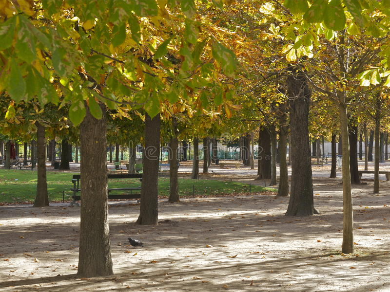 Download Hotspot Park Trees In Autumn Stock Image - Image: 16632901
