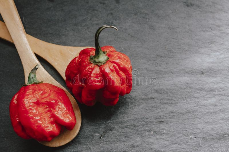 Hottest pepper in the world. Trinidad Scorpion Butch, thousands of times more spicy than Habanero. On black slate background, with royalty free stock image