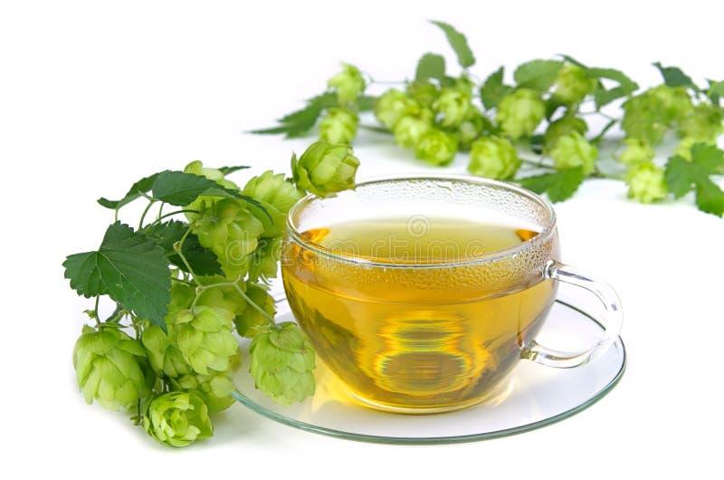 Houblon 03 de thé photographie stock