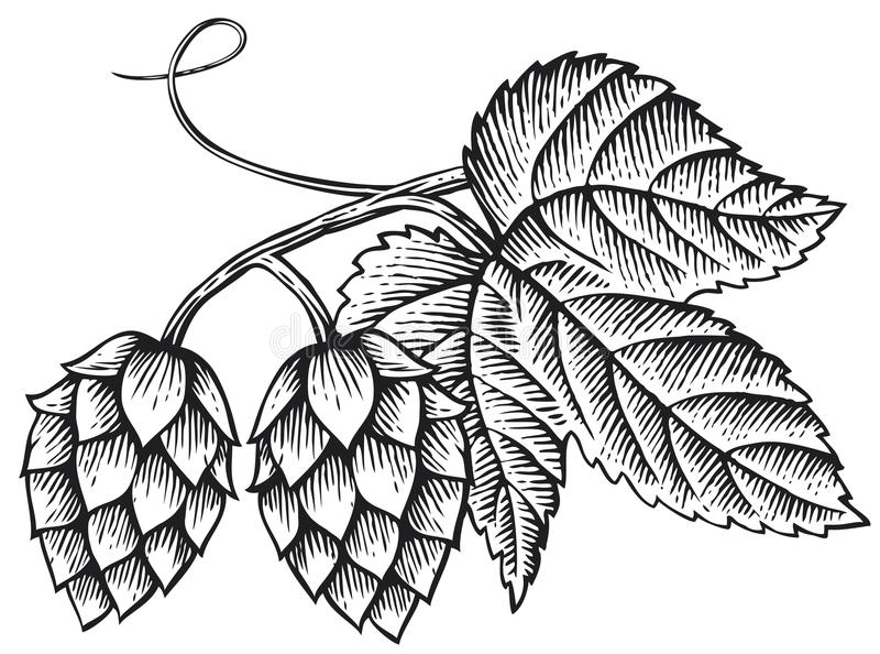 houblon illustration de vecteur