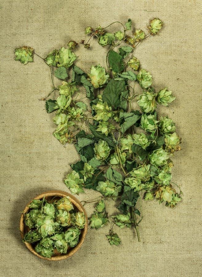 Houblon sauvage Herbes sèches Phytothérapie, h médicinal phytotherapy image libre de droits