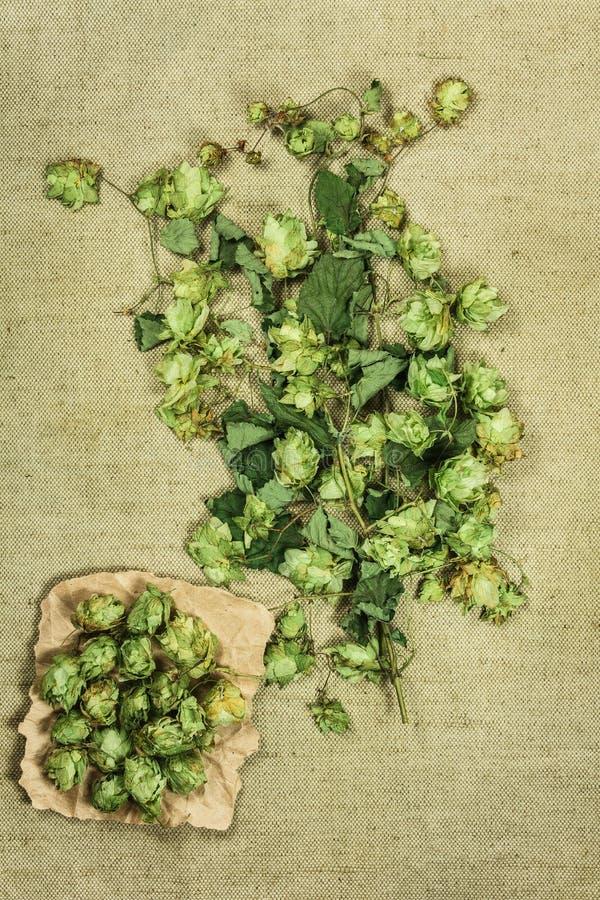 Houblon sauvage Herbes sèches Phytothérapie, h médicinal phytotherapy images libres de droits
