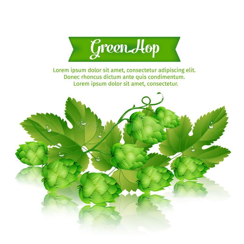 Houblon vert illustration stock