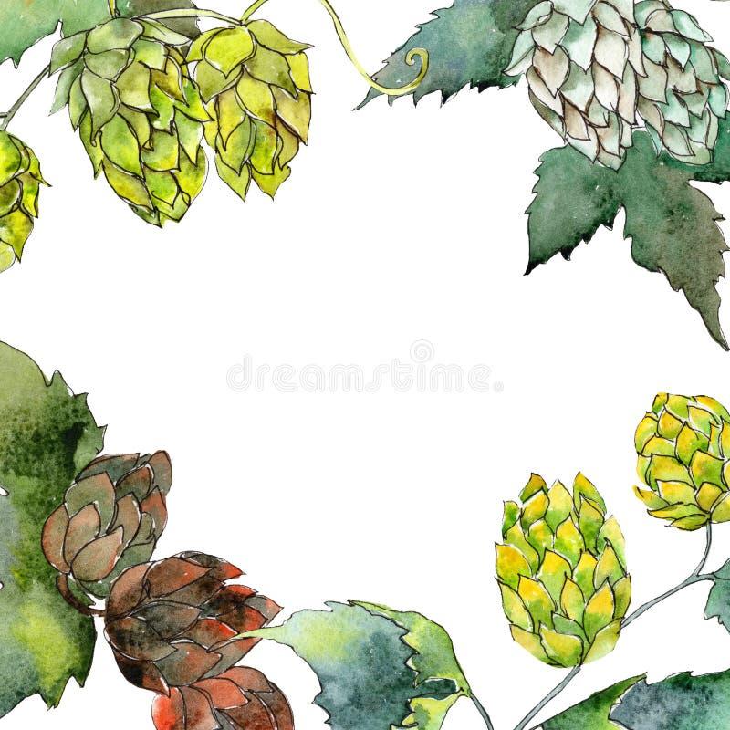 Houblon verts Ensemble d'illustration de fond d'aquarelle Place d'ornement de frontière de vue illustration de vecteur