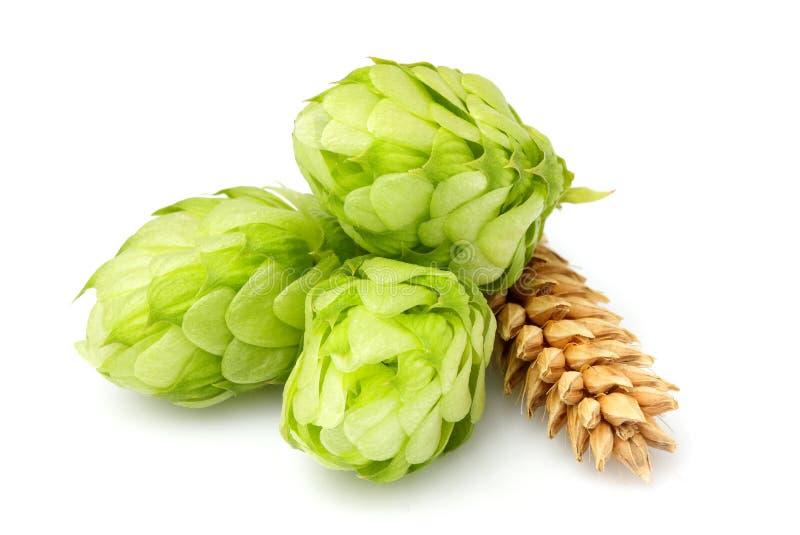 Houblon verts, oreilles d'orge et grain de blé photographie stock libre de droits